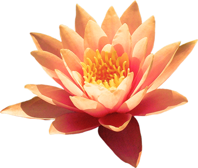 lotus_flower_deeya